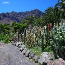 Парк кактусов на Канарах
