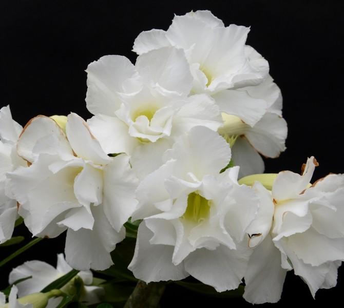 Шапка цветов
