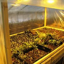 Посевы в тепличке
