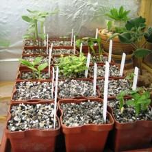 Посев семян суккулентов