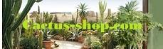 Cactus-shop
