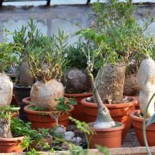 Коллекция растений Раритет