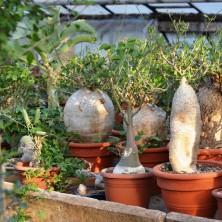 Коллекция бутылочных растений