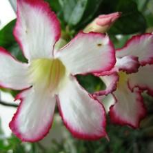 Зимой цветочки бледнее