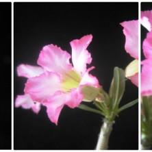 Нежные цветы!