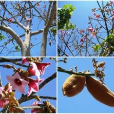 Цветение может начаться до появления листьев