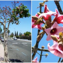 Цветы похожи на колокольчики
