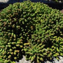 Парк кактусов