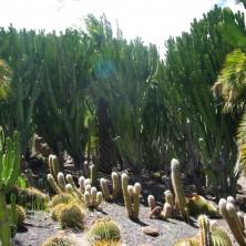 Cactualdea Park