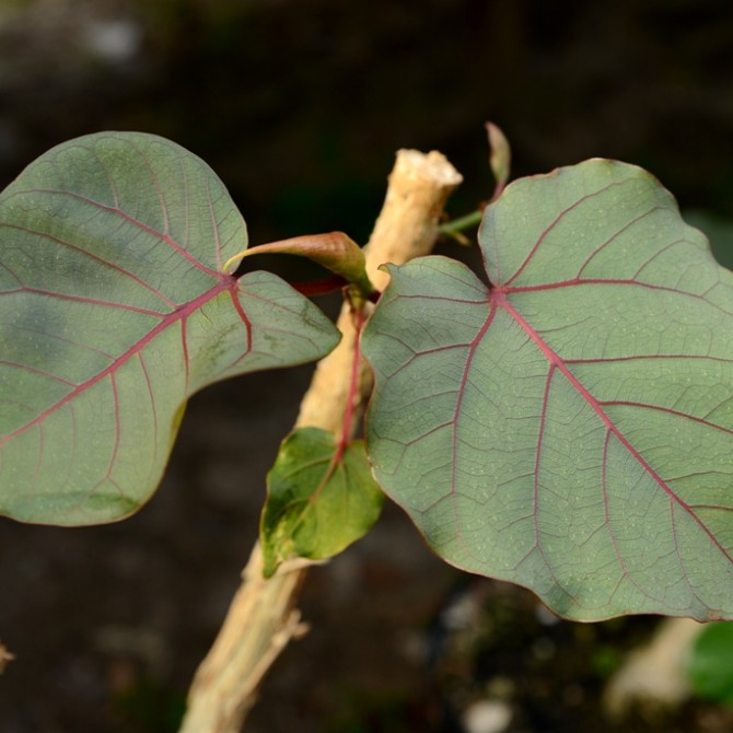 Чаще всего вредители комнатных растений поражают молодые листья