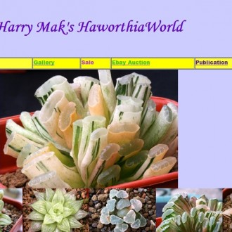 Harry Mak's Haworthia World