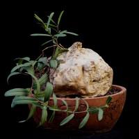 Редкие растения фото