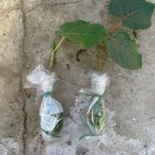 Срезанные ветки с корнями