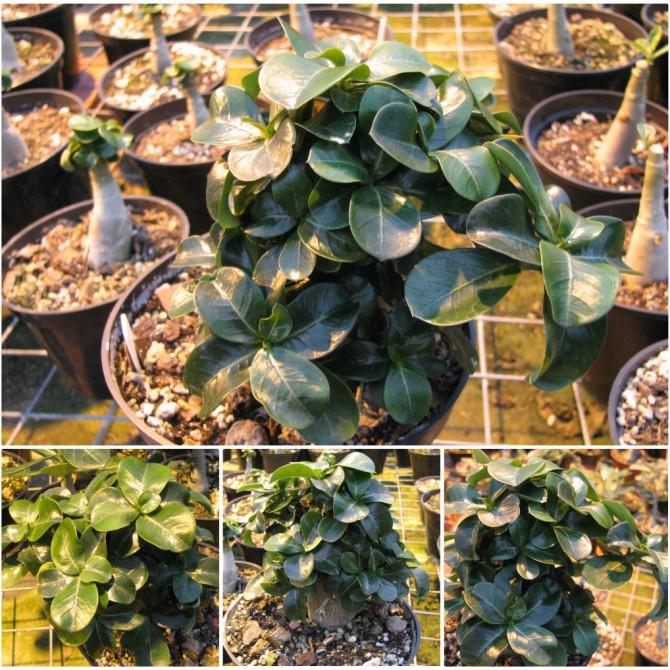 Растения почтой