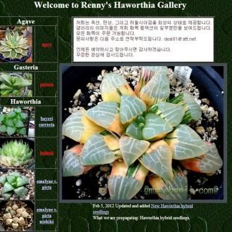 Renny's Haworthia