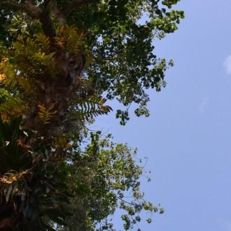 Эпифиты - Папоротники и Бромелиевые
