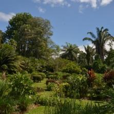 Пальмы в Ботаническом Саду