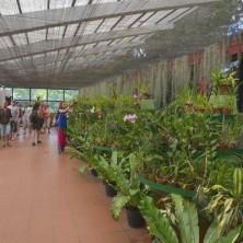 Выставка Орхидей