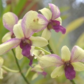 Орхидеи бывают разные