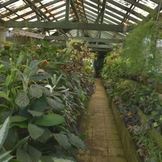 Коллекция растений