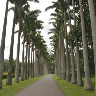 Одна из пальмовых аллей