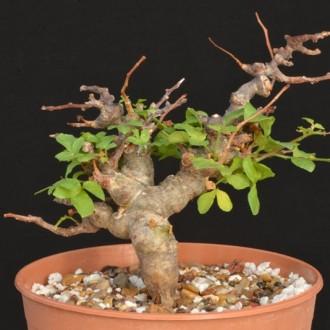 Уникальные растения